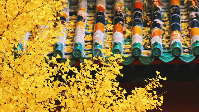 錯過再等一年!您的賞秋余額已不足!抓緊最后時間,來京郊感受秋色吧