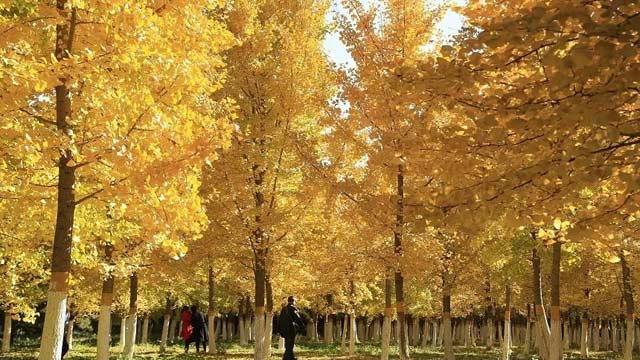 京城竟藏了一座绝美的冷门公园,连女神郭碧婷都跑来拍照打卡