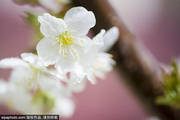 赞皇县第二届山花节开幕