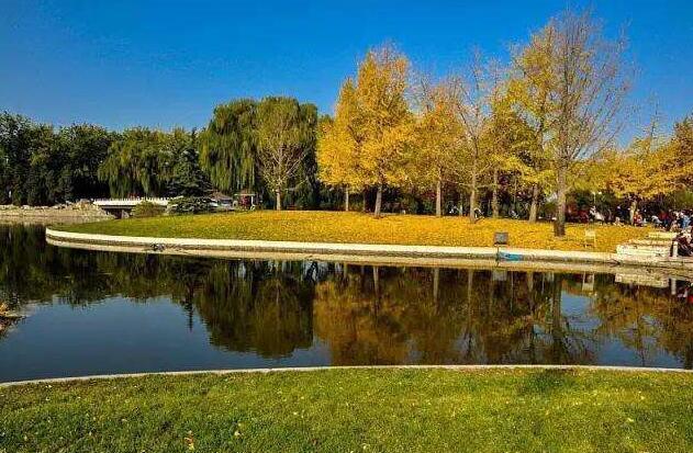 红领巾公园落叶缤纷,秋色正好