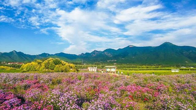 漫山紅葉、花開成海……北京這片最美秋色,不花錢也能看!