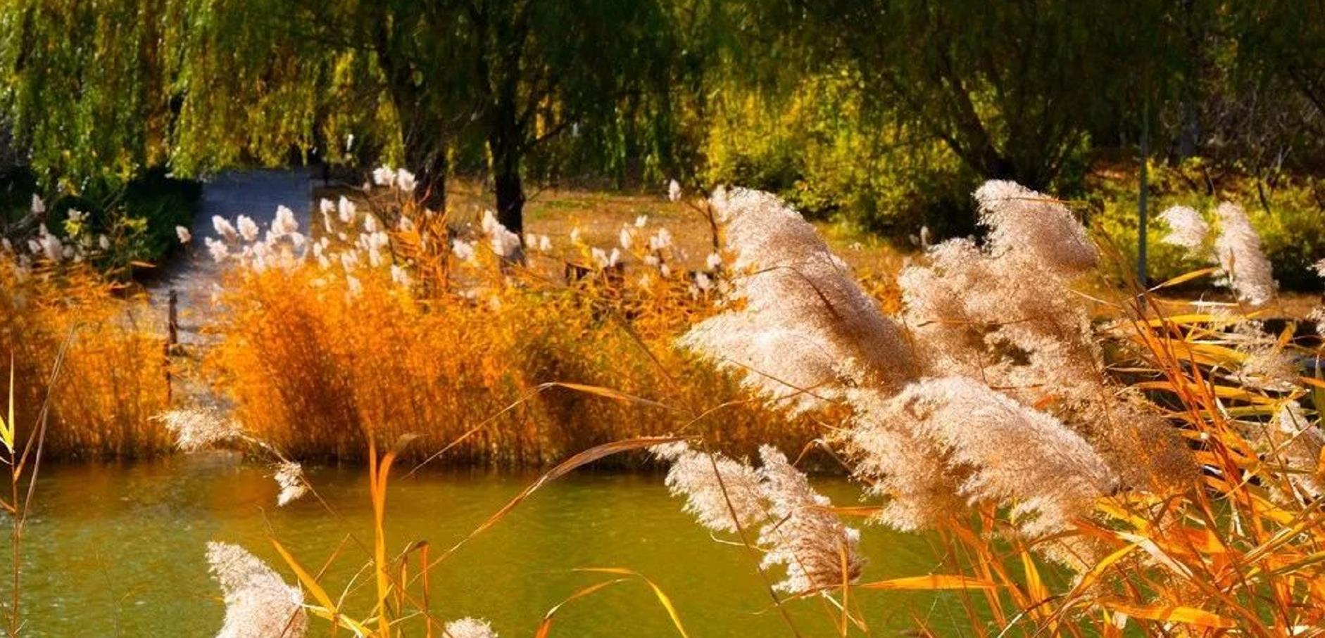 6個北京秋日最有靈氣的景點!讓我們真正走進大自然,而不只是路過