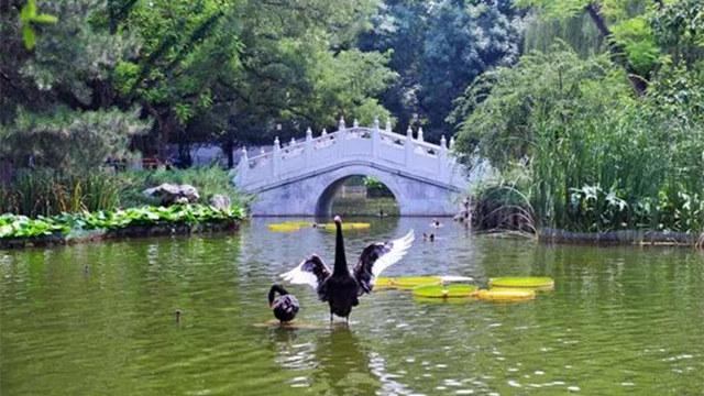比頤和園人少,比北海清幽!北京這個絕美園林夏日美翻了!