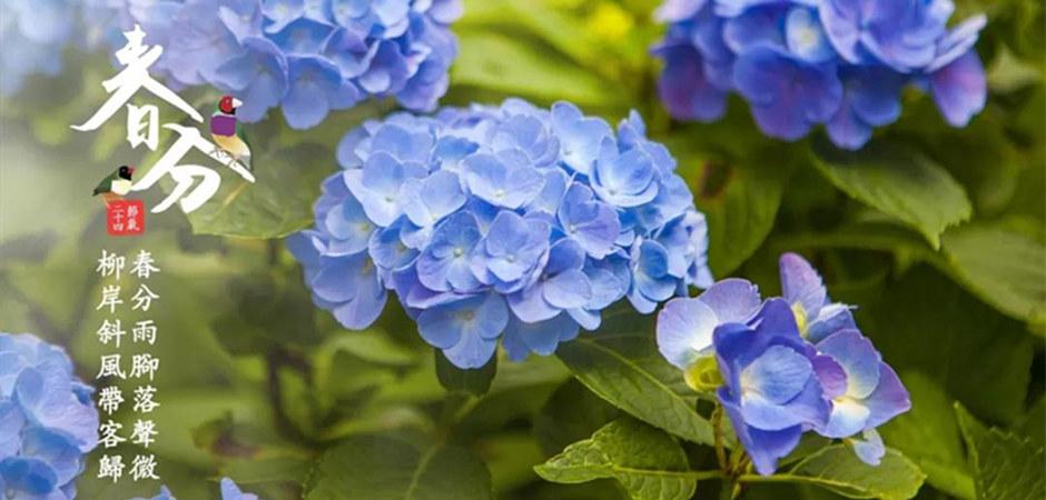 【今日春分】严寒已去春日暖,风和蝶飞花正好!最适合踏青的日子到了!