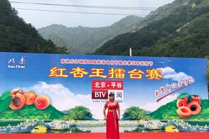 平谷北寨红杏采摘节开幕