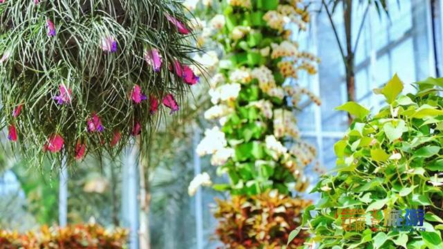 中科院植物所北京植物園展覽溫室