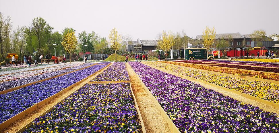 倒计时4天!北京世园会即将盛大开园,最全信息都在这里了!