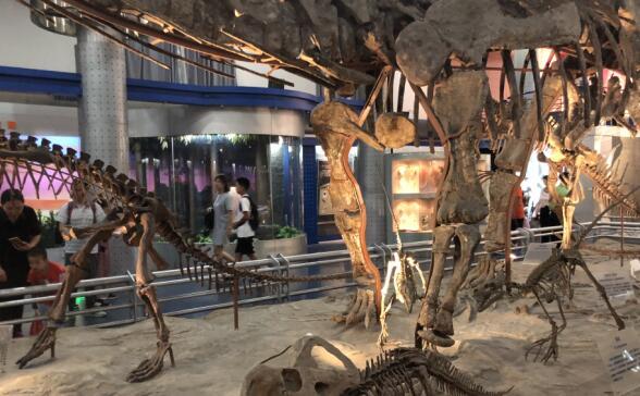 澳门葡京赌场自然博物馆