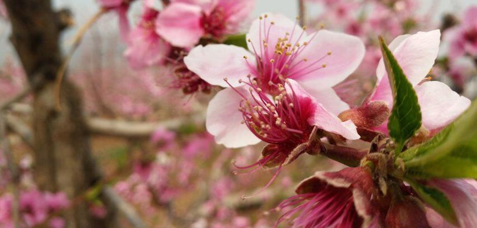 今日谷雨!世界最大桃花海,已经等了你整个春天了!详细攻略在这里,别错过!