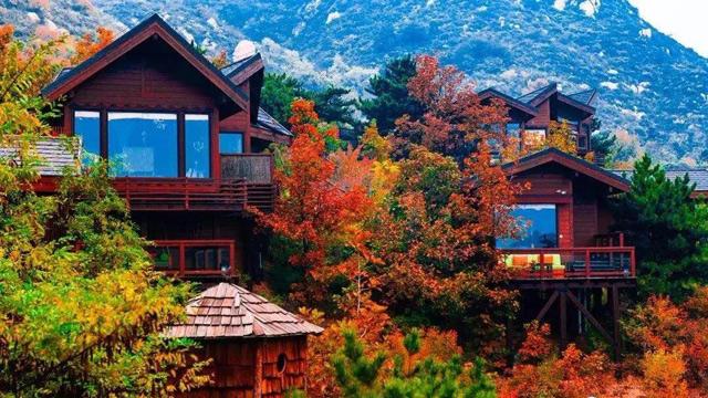 童话树屋的秋天,许你一个色彩斑斓的世界