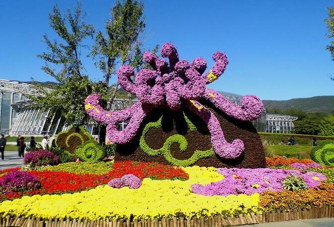 北京植物园菊花展