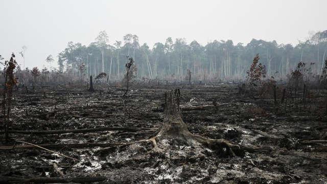 印尼森林山火后一片废墟 烟霾笼罩
