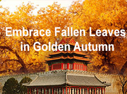 Embrace Fallen Leaves in Golden Autumn