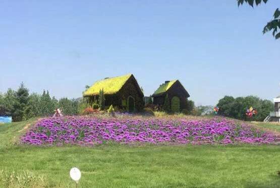 澳门葡京赌场国际鲜花港第十届菊花文化节将开幕