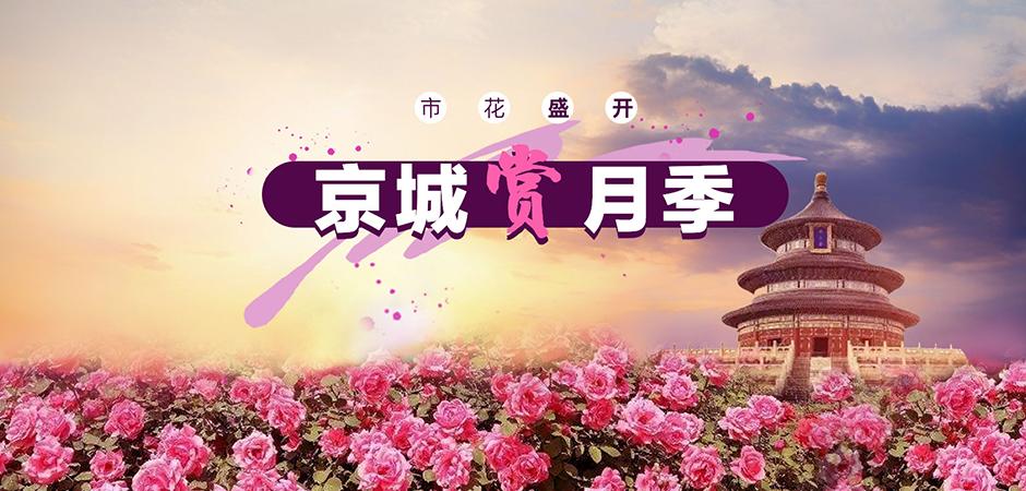 市花盛开 京城赏月季