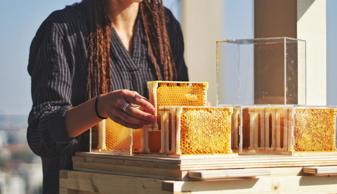 """意大利公司推家庭版养蜂装置教你变城市""""产蜜人"""""""