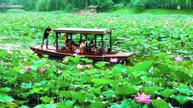紫竹院公園竹荷文化展開幕