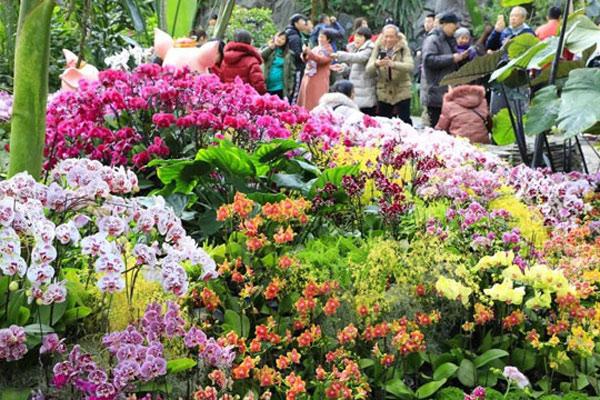 植物园赏兰到十五