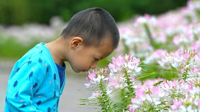 石市植物园:秋意渐浓花开蝶舞