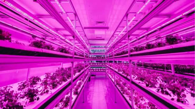 国内首个世界级农场!最IN的新科技、最浪漫的玩法……全都在这儿!