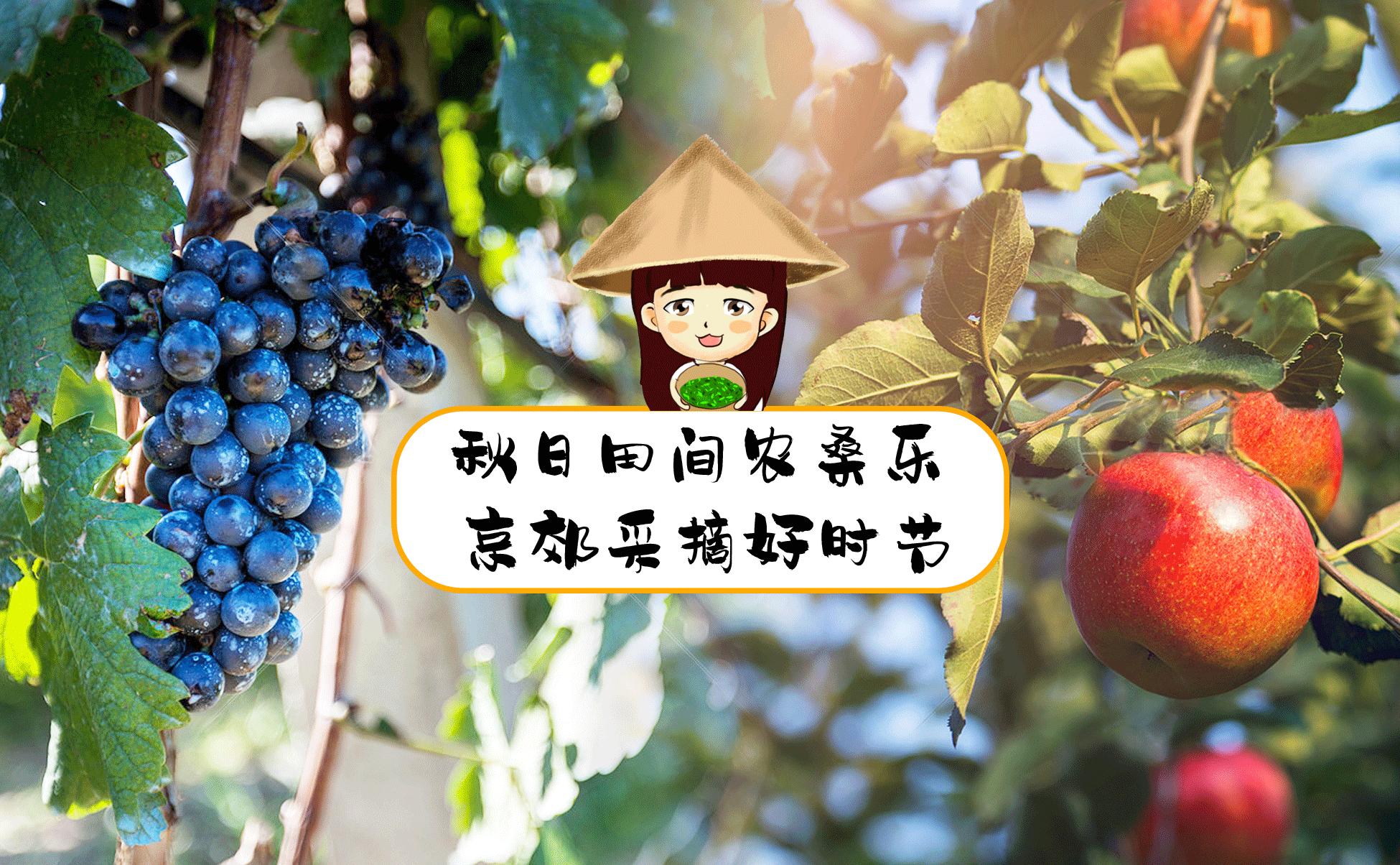 秋日田间农桑乐 京郊采摘好时节