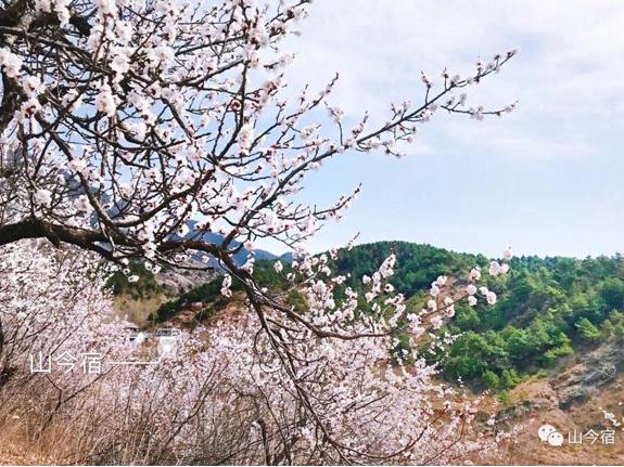 山今宿:春的赏味期