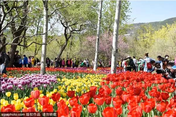 现在北京最美的5个赏花去处 再不去春天就走了!