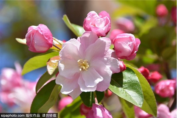 天津大学海棠季校园开放日举行