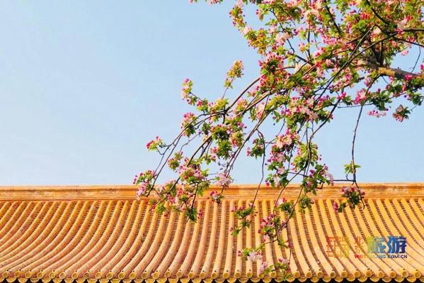 一到四月,故宮就美成了御花園。連劉亦菲、王源都來拍照打卡(附賞花地圖)