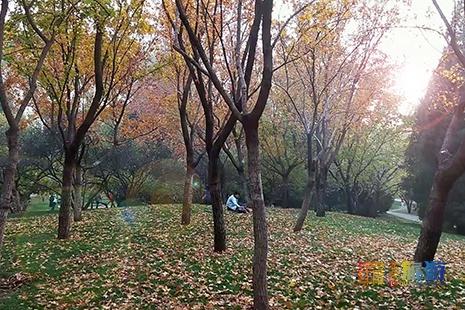 颐和园彩叶落满地,或成为下一个拍照圣地!