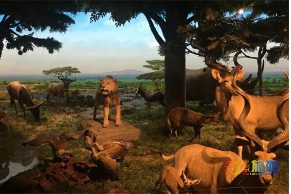 WHAT? 北京自然博物馆可以夜游?还能近距离感受非洲?