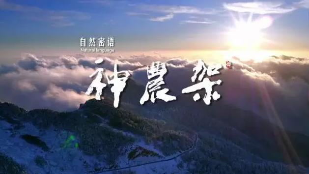 《自然密语--神农架》精华版在这,带你穿越神农架四季!