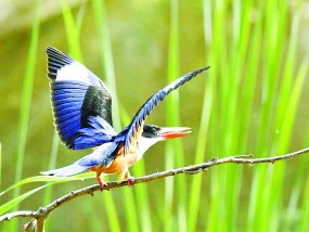 北京亦庄 珍稀鸟禽新乐园