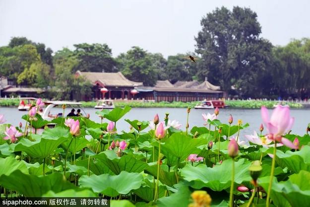 老北京都不一定清楚!北京城内隐藏的豪宅!