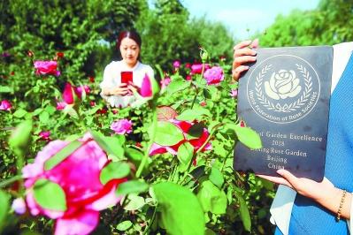 """北京再添""""世界月季名园"""""""