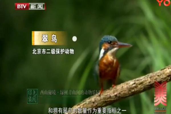 绿树青山间的动物乐园