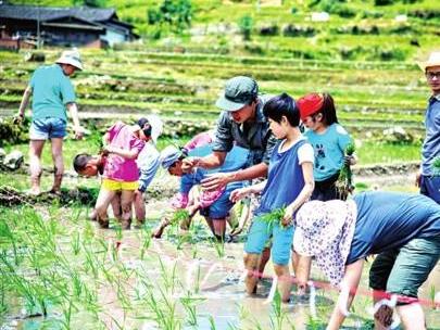 水稻插秧节 引来城里娃