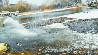 玉渊潭冲水融冰,上冰拍鸳鸯的不见了