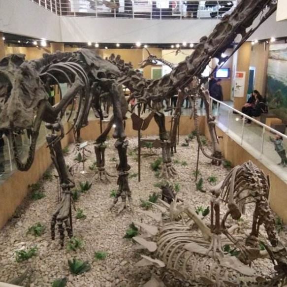 中国古动物馆之旅,领略亿万年前的恐龙时代