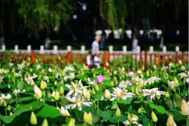 12 красивейших водоёмов в Пекине (2)