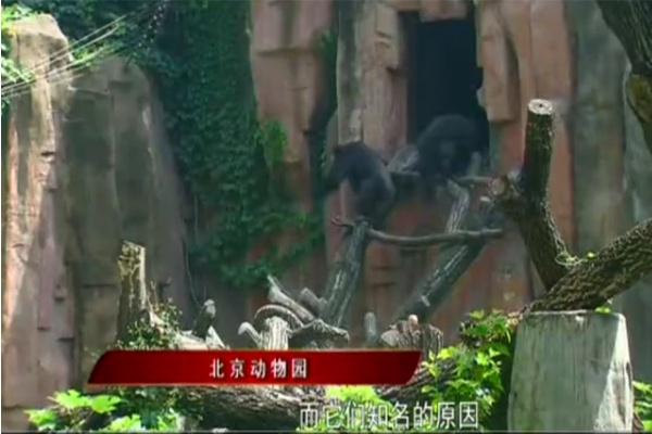 北京动物园里可爱的动物们