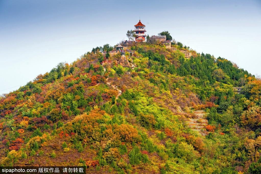 Admiration des feuilles rouges d'érable au parc forestier Baiwangshan