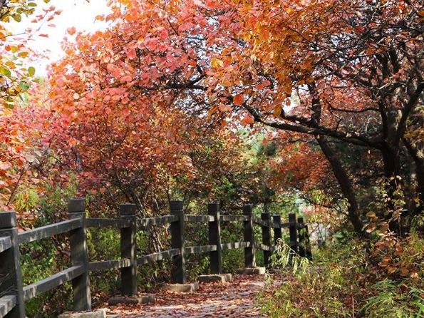 首届金海湖红叶观赏季开幕