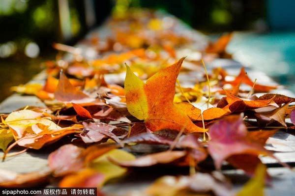 不出城区也能赏秋景的好地方