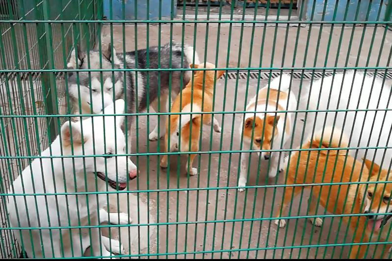 动物园亲自遛遛小狗