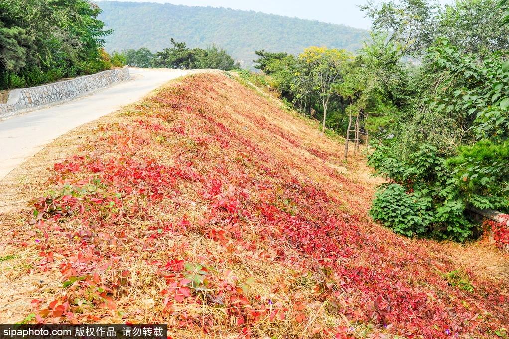Le beau paysage en automne au Parc forestier national de Xishan