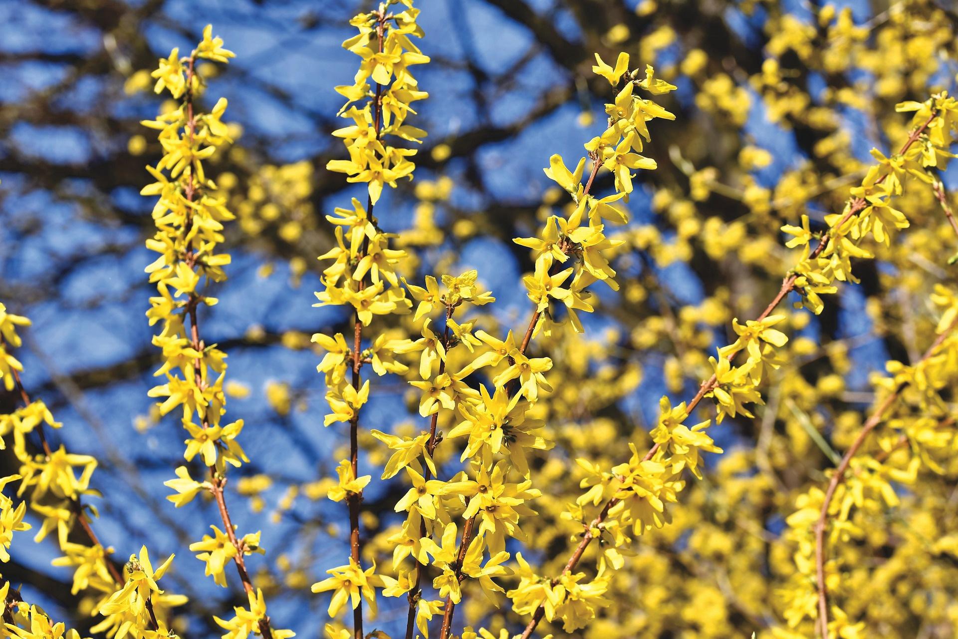 Descubre la primavera en la Universidad Beihang