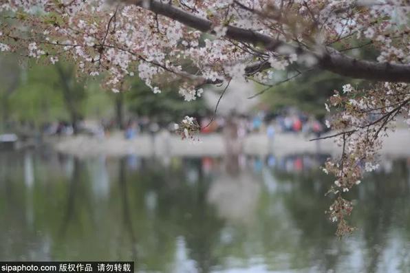 2019北京赏花时间表新鲜出炉,现在走起不再错过!