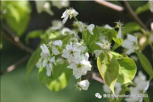 """去什么武大,这里才是四月北京最美的""""神仙""""校园啊!"""