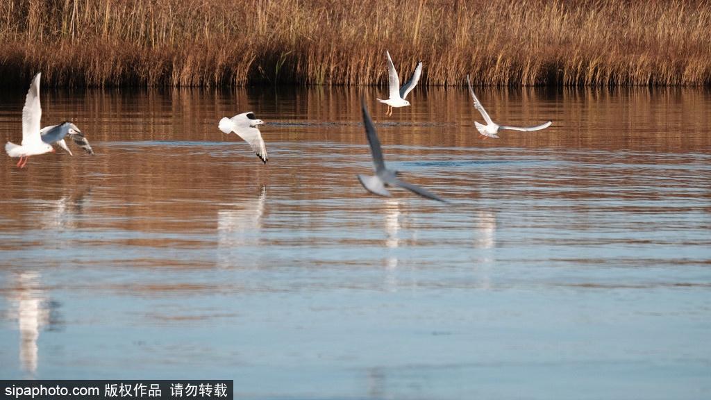 Beijing Wild Duck Lake National Wetland Park reopens after winter break